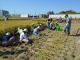 「ふれあい田んぼ教室」10月9日・11日収穫体験を更新しました。